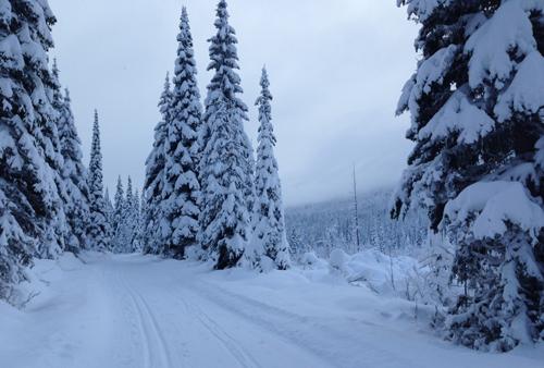 bc_winter